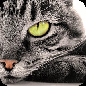 Trova il gatto ★★★★★★★★☆☆